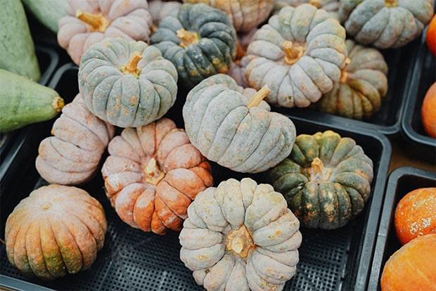 """9月4日からはじまる〈種と旅と〉は、種と農について考え、在来種を味わう""""9日間の祝祭""""。"""