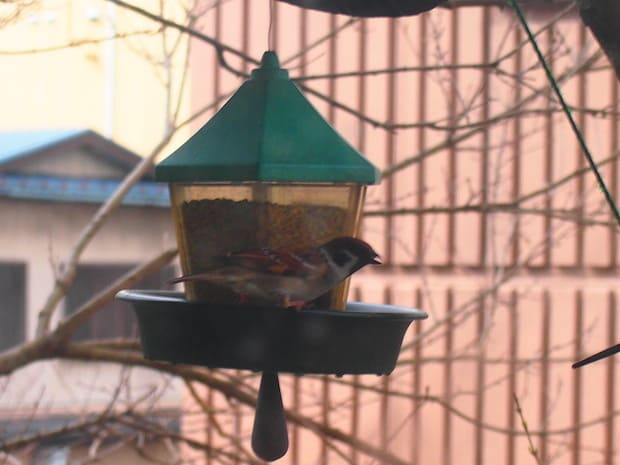 商店街にある鳥かご。スズメがたくさん訪れています。