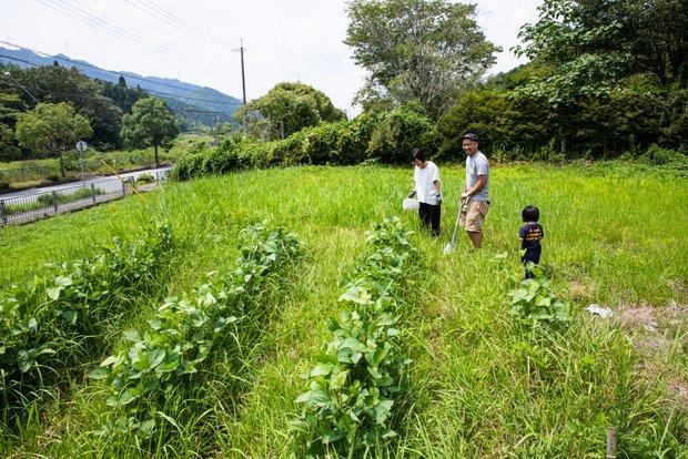 写真奥に広がるのは、ただの草地のようだが実は自然農の畑。