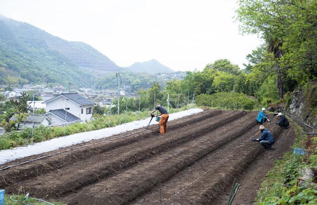 今年(2021年)は少し遅めで、4月28日に種生姜の植え付け。
