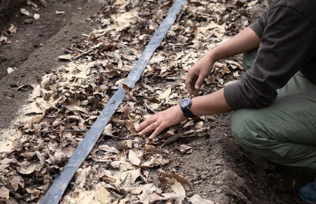 土の中がいい環境になるように、落ち葉と米ぬかなどを土の上に。