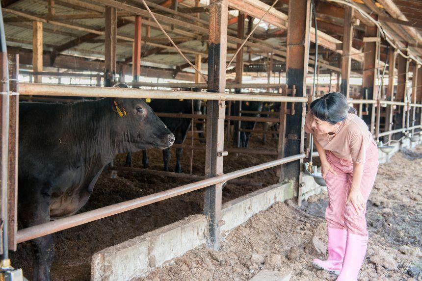 仔牛を愛おしそうに眺める野村さん