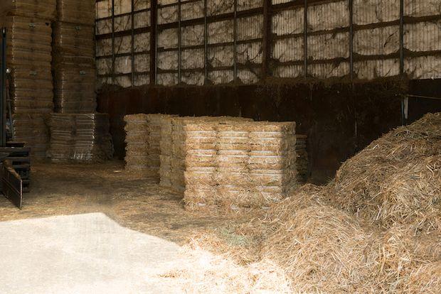 牧草も農薬を使わずに自社で育てる