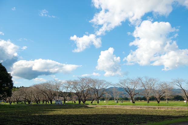春には2000本の桜が咲き誇る西都原古墳群