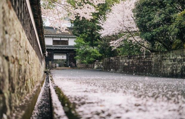 桜の季節の飫肥城大手門の前の通り。